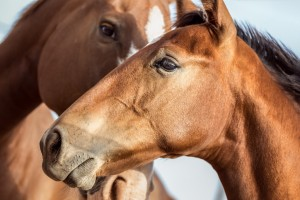 Seirios_horse_therapy-1024x683