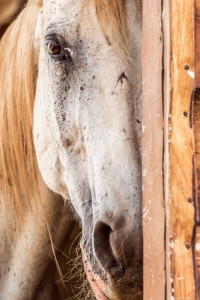 Seirios_horses_box-683x1024