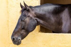 Seirios_stables-1024x683