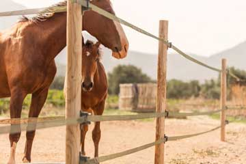Horse Stables - Athens Greece - Seirios Riding Club