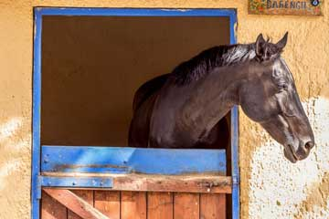 Horse Riding Lessons - Athens Greece - Seirios Riding Club